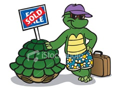 ist2_3052012_turtle_selling_his_shell