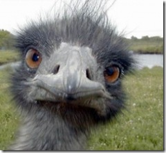 t1ostrich_funny_face
